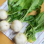 All About Hakurei Turnips
