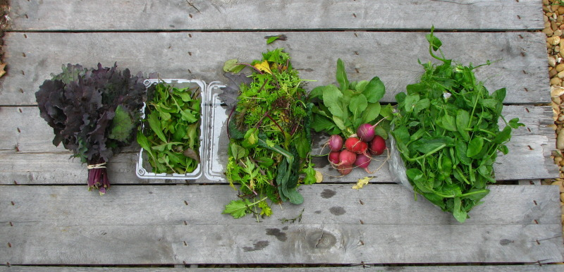 share-spring-csa
