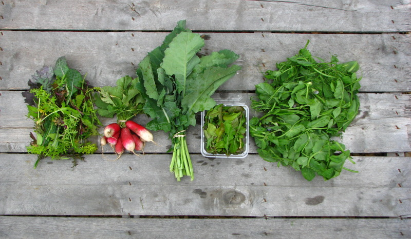 spring-csa-share