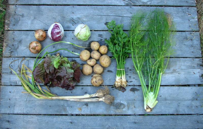 small-share-fennel-radicchio