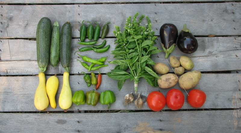 small-summer-csa-share