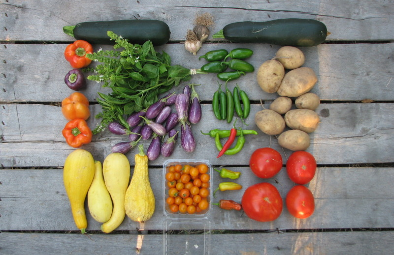 large-summer-csa-share