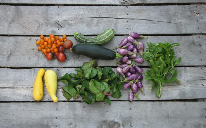 summer-CSA-share-organic