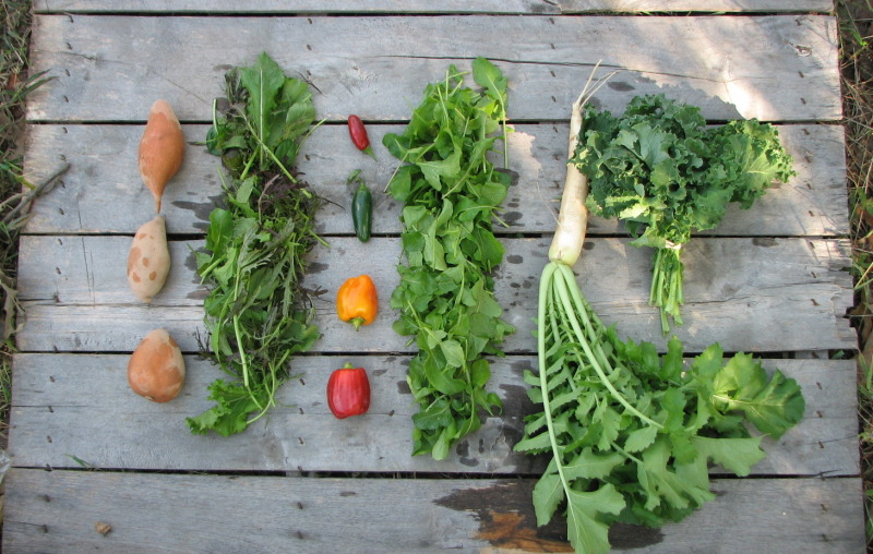 small-fall-csa-share