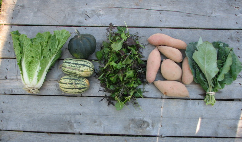 small-organic-csa-share-fall
