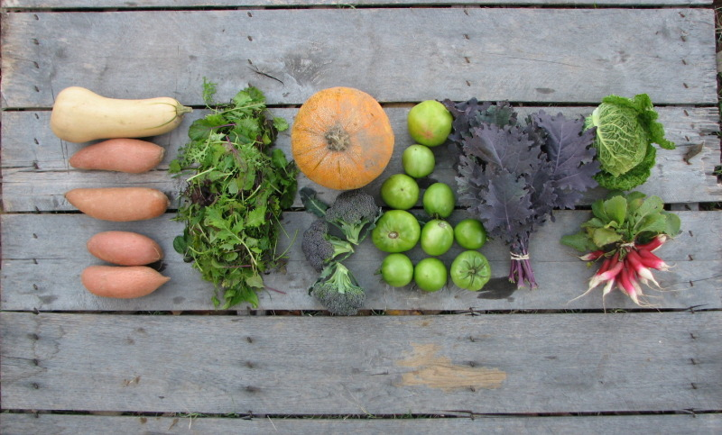 Fall-CSA-Small-Share