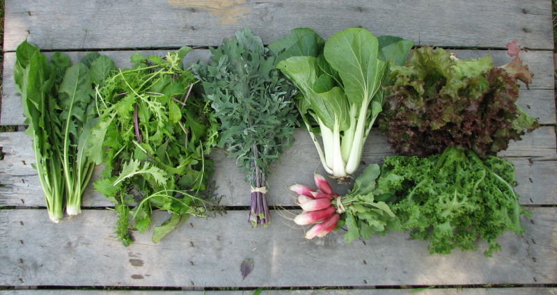 spring-csa-share-large