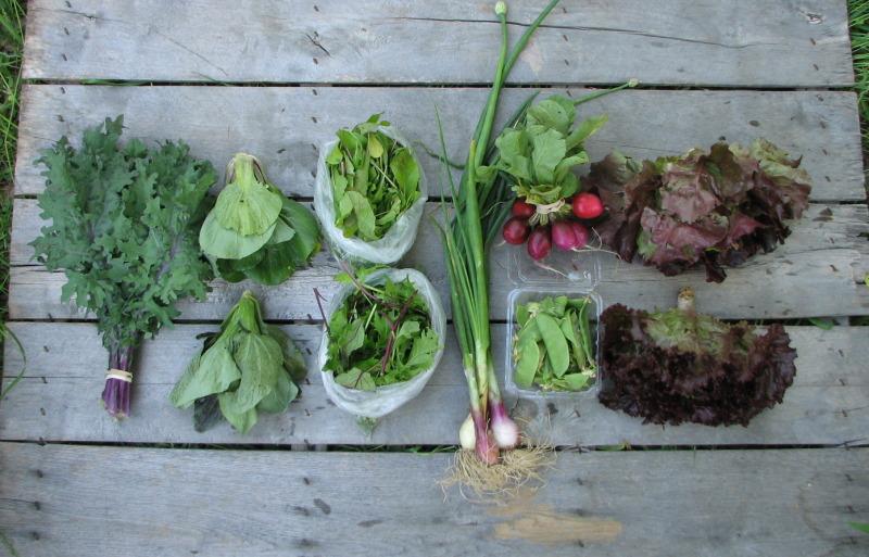 small-csa-share-organic