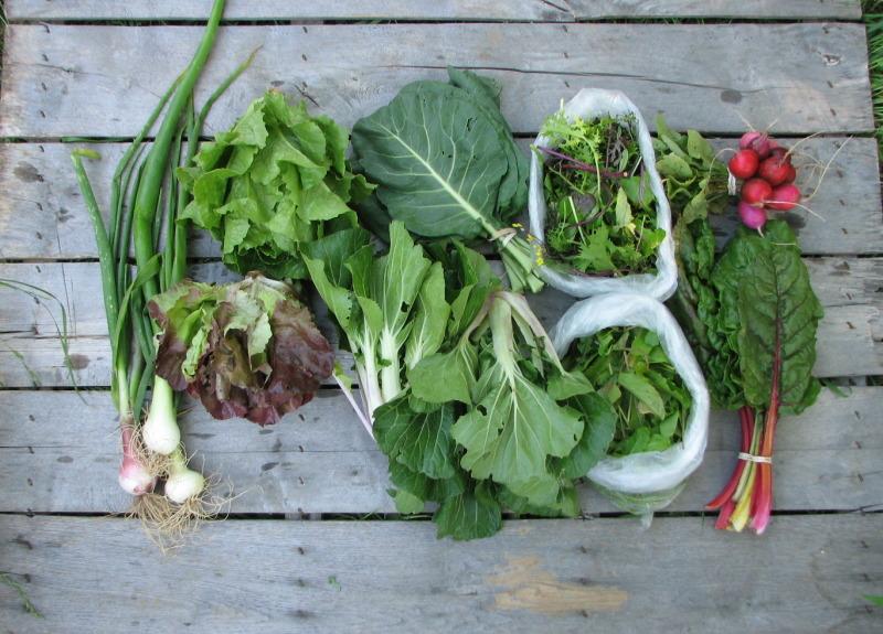 Large-spring-csa-share-organic