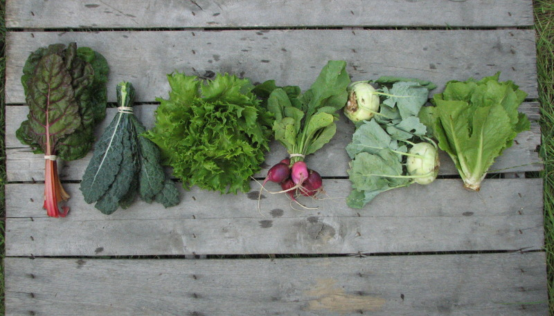 small-spring-csa-share