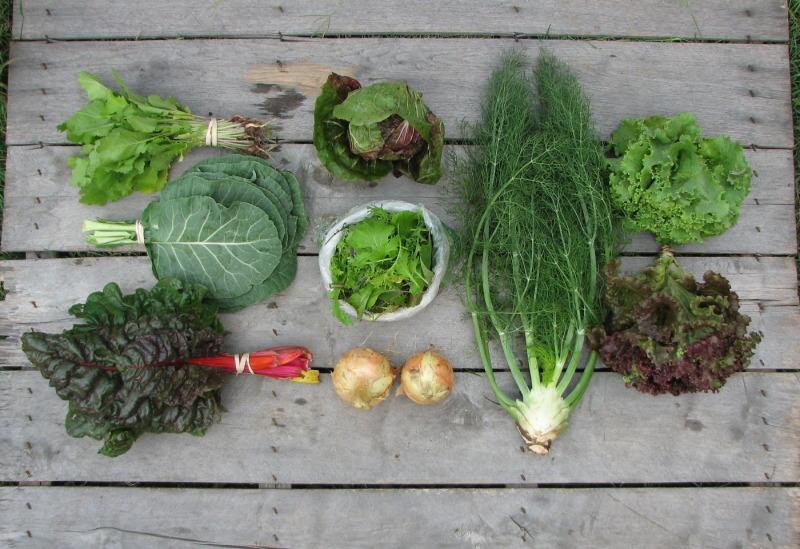 CSA-Share-Small-Spring-Organic
