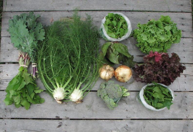 CSA-share-large-spring-organic