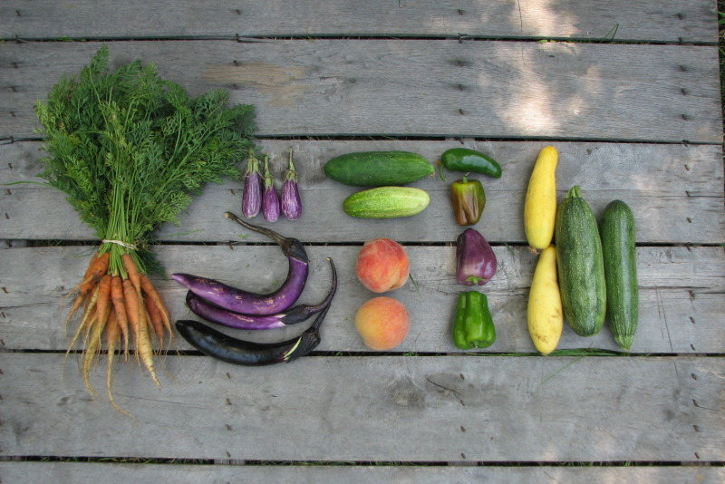 CSA-summer-share-small